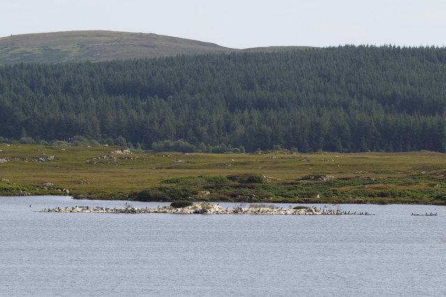 Cormorant nesting colony, Castle Loch