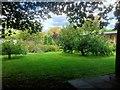 SJ4572 : Trafford Hall Garden by David Dixon