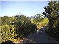 SP9905 : White Hill, Whelpley Hill by David Howard