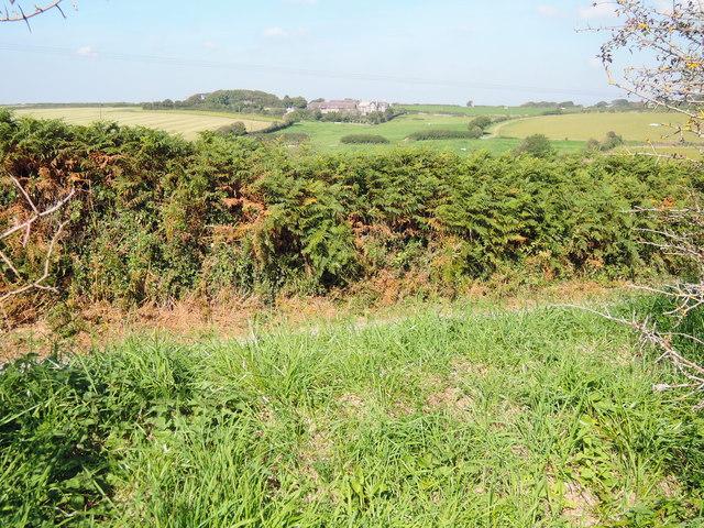 Towards Rowden Court and Rowden Farm
