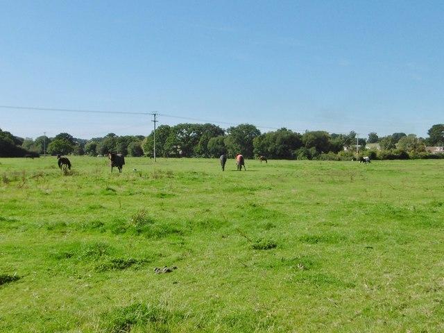 Netley Marsh Horse Grazing 169 Mike Faherty Cc By Sa 2 0