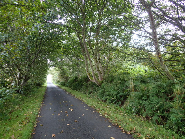 The road beside Gyre Wood