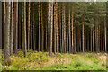 NZ0059 : Trees of Robson's Plantation : Week 40