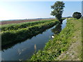 TL5674 : Tree on the bank of Soham Lode by Richard Humphrey