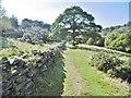 SJ9666 : Danebridge, footpath by Mike Faherty