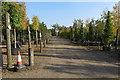 TL1442 : Tree Nursery by Philip Jeffrey