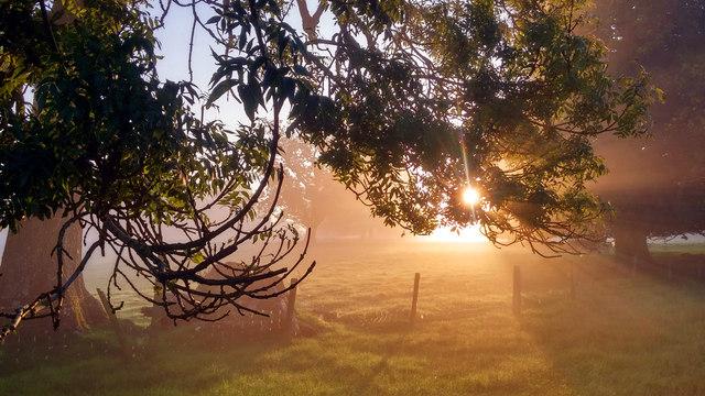 Sunlight through the ash