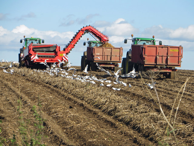 Potato Harvest near Worlaby