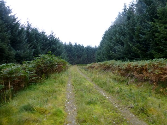Forestry Track Near Ettles Knowe