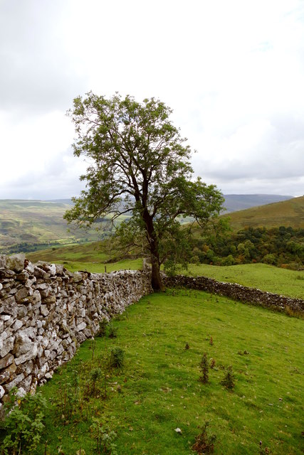 Ash tree and wall junction