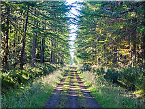 NH6661 : Well maintained forestry road through the Millbuie Forest by Julian Paren