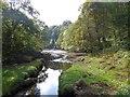 SW7528 : The creek below Trenarth Bridge by David Smith