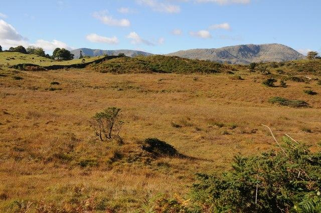 Upland grazing near Torver Intake