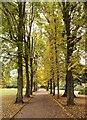 TQ2989 : Tree-lined pedestrian path, The Grove, Alexandra Park : Week 42