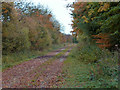 SK8200 : Autumn along the disused former A47 by Mat Fascione