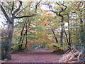 SU9585 : Trees in autumn, Burnham Beeches by David Hawgood