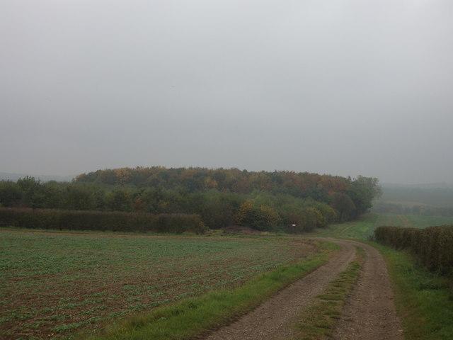 Approaching Jack's Furze