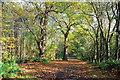 SJ5371 : Autumn in Delamere Forest by Jeff Buck