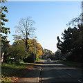 TL4055 : Barton: Comberton Road in autumn by John Sutton