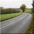 SO0392 : Bend in the road north from Caersws by Jaggery