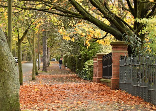 Autumn Leaves Cyprus Avenue Belfast 169 Albert Bridge