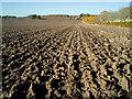 NH6454 : Field below Balnakyle Farm : Week 44