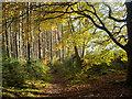 NH6455 : Sunny corner of Bellton Wood : Week 45