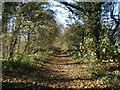 SE5003 : Path at Barnburgh Cliff : Week 45