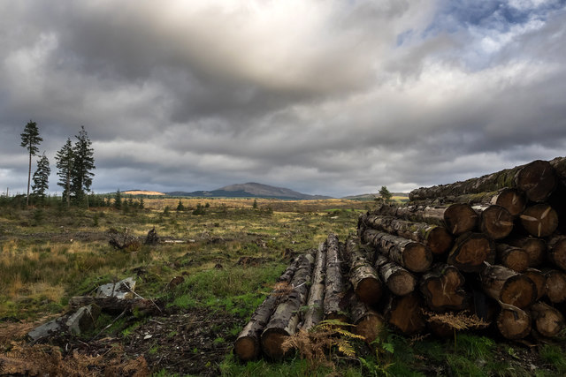Timber pile and clearfell