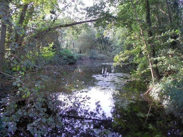 River Ash in Littleton (1)