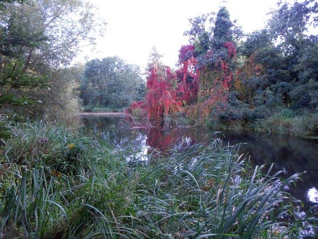 River Ash in Littleton (2)