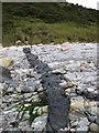 J3824 : Basalt dyke in the local Silurian rocks by Eric Jones