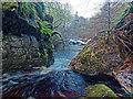 NH8348 : Allt Dearg - Cawdor Wood : Week 48