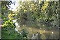 SU5666 : Kennet & Avon Canal by N Chadwick