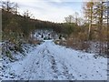 SJ9571 : Track in Macclesfield Forest by Dave Dunford