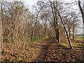 TQ2997 : Bridleway near Williams Wood, Trent Park, London N14 : Week 49
