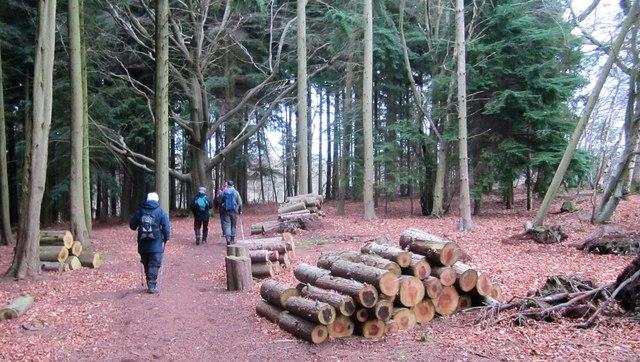 Working Woodland