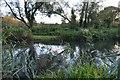 SU5066 : Kennet & Avon Canal by N Chadwick