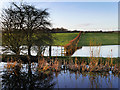 SD7808 : Flooded Farmland next to the Canal by David Dixon