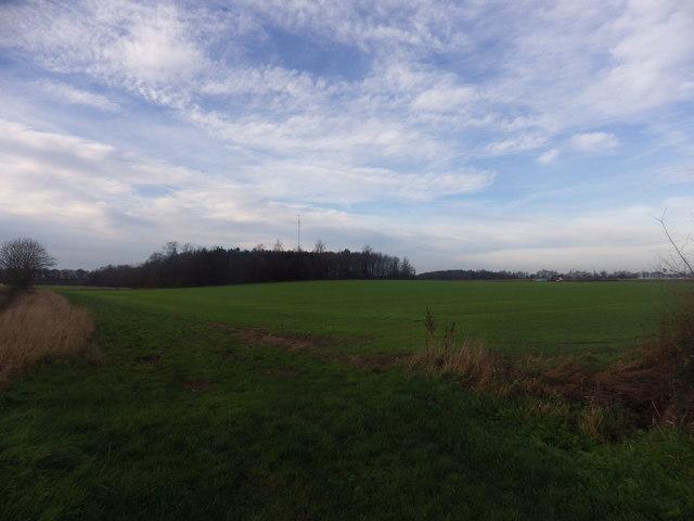 Farhill Wood and Mast