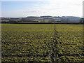 SP8220 : Path heading towards Norduck Farm by Shaun Ferguson