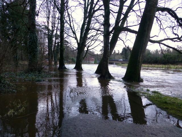 Flooded path, Cranny