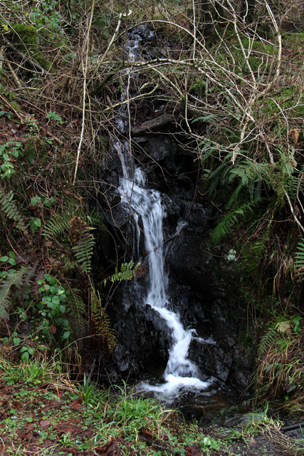 Mini waterfall in Grizedale Forest