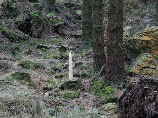Orienteering Post in Grizedale Foreset