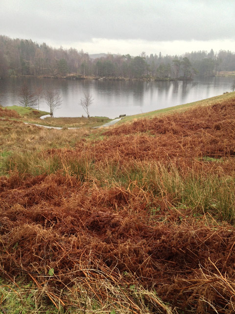 Tarn Hows in January