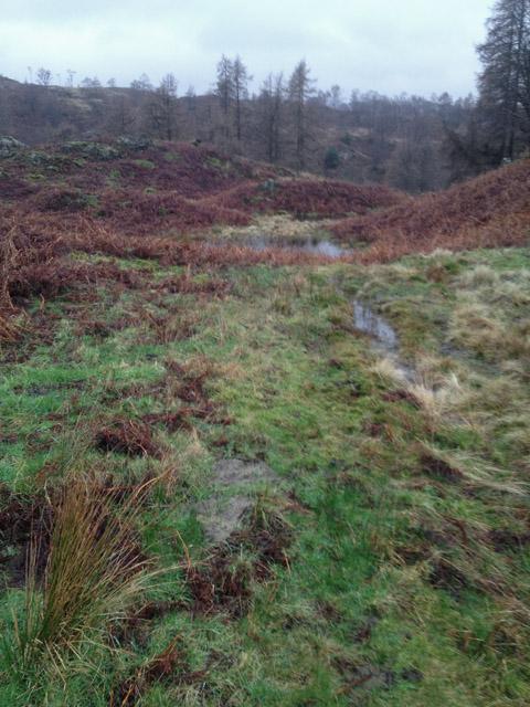 Wet ground above Tarn Hows