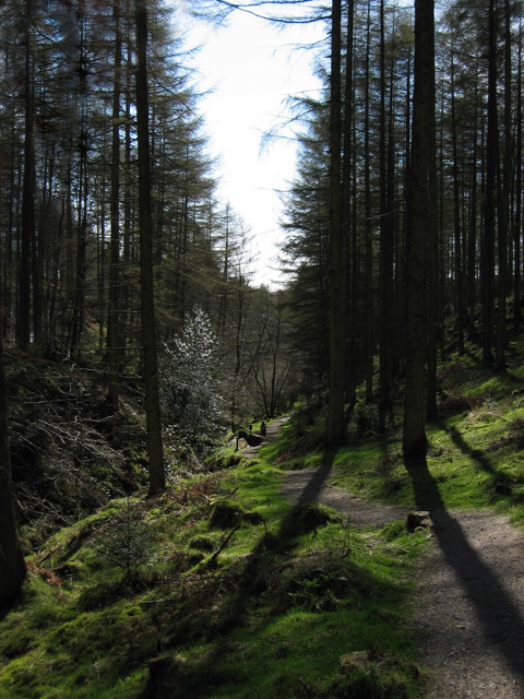 Walk in the Grizedale Forest