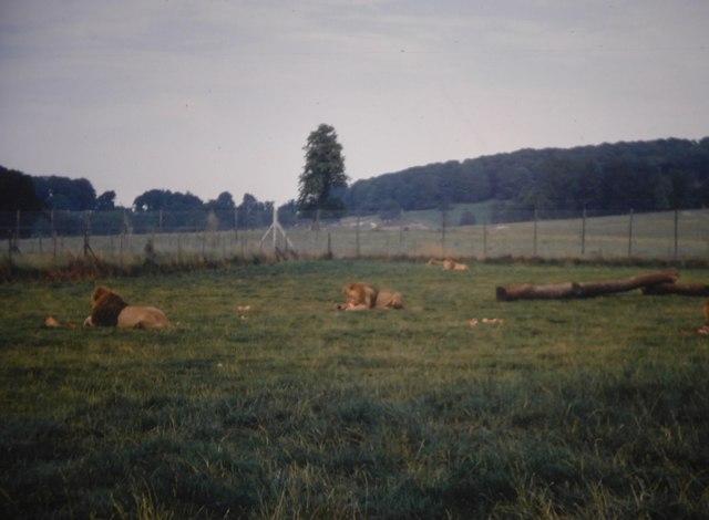 '69 Lions