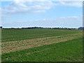 TQ4790 : Flat fields by Robin Webster