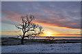 NT5934 : Sunrise on Bemersyde Hill : Week 3